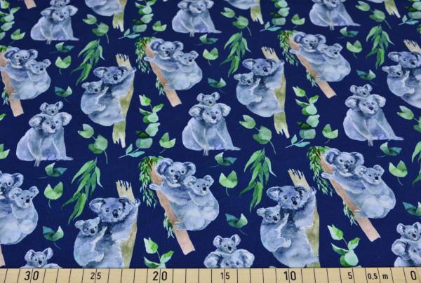 Metin (Koala, Australien, Tiere) - B1712