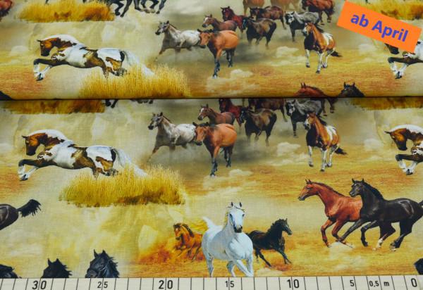 wild horses - Z407