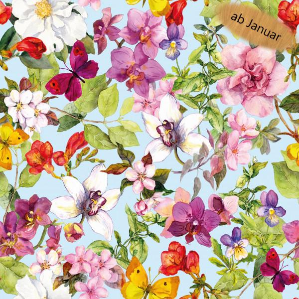 Nikola Z1446, Glünz GmbH, Blüte, bud, Blume, orchidee, Butterfly, Schmetterling,